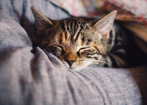 夜、ぐっすり眠る為に…