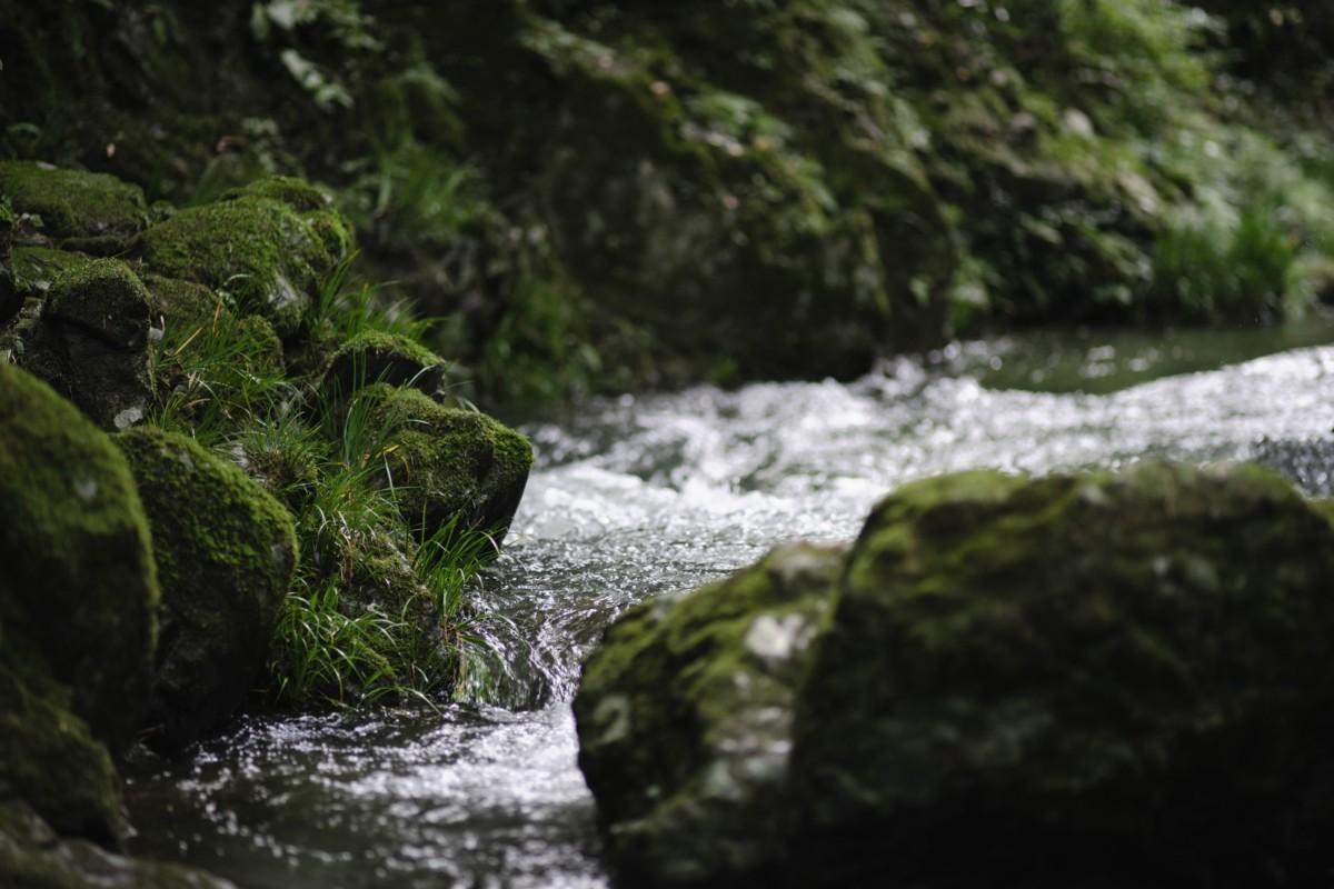 池の水をぜんぶ抜く大作戦